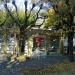 libreria iarrapino 2